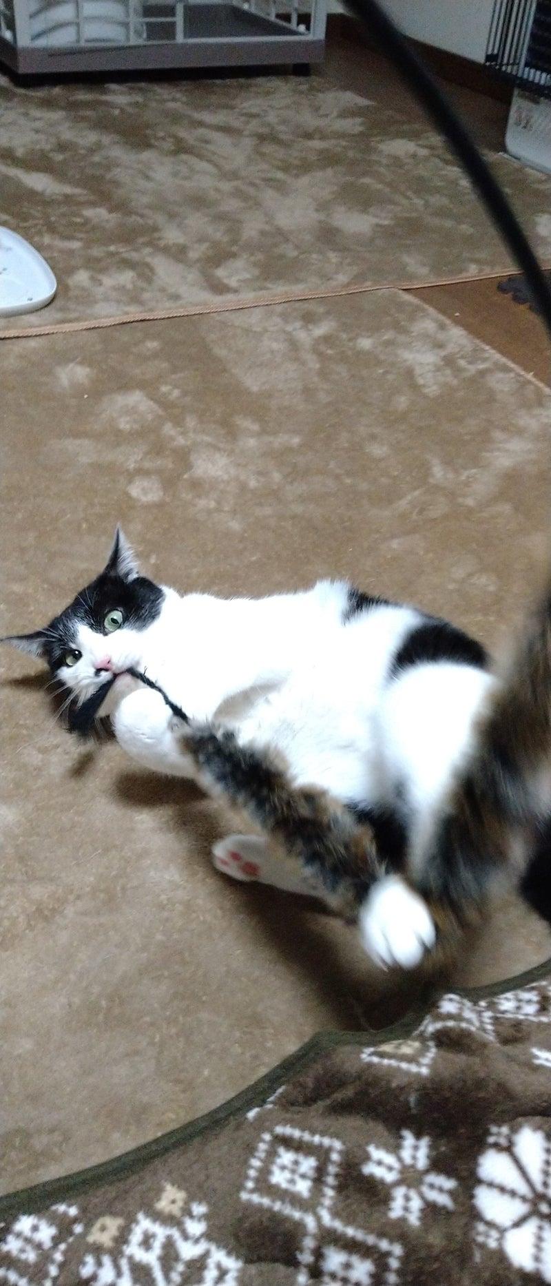 カフェ 盛岡 猫