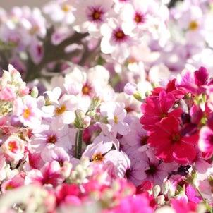 庭では春の気配(節分)♪&鎌倉鶴岡八幡宮にお参りの画像
