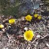 立春は特別の画像