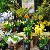 立春♪の画像