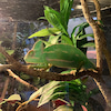 【沖縄子連れ遊び場】爬虫類を見るためにDMM水族館への画像