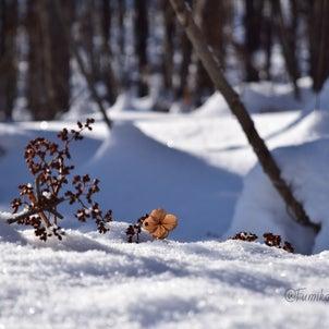 森のたからもの 26の画像