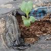 スティックブロッコリーの芽の画像