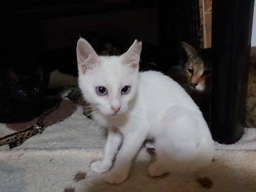 こ ー 猫 白 みや