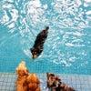「こうやって泳ぐんだよ」みんな、見てて。の画像