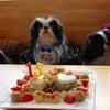 狆「惣太郎くん」のBirthdayケーキの画像
