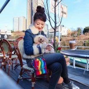 お天気が良かったので母の愛犬パールちゃんとお散歩の画像