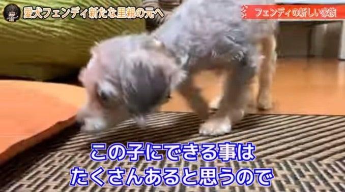 愛犬 gackt