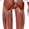 下肢神経痛    なかなか取れないお尻から足の先まで続く痛み。の画像