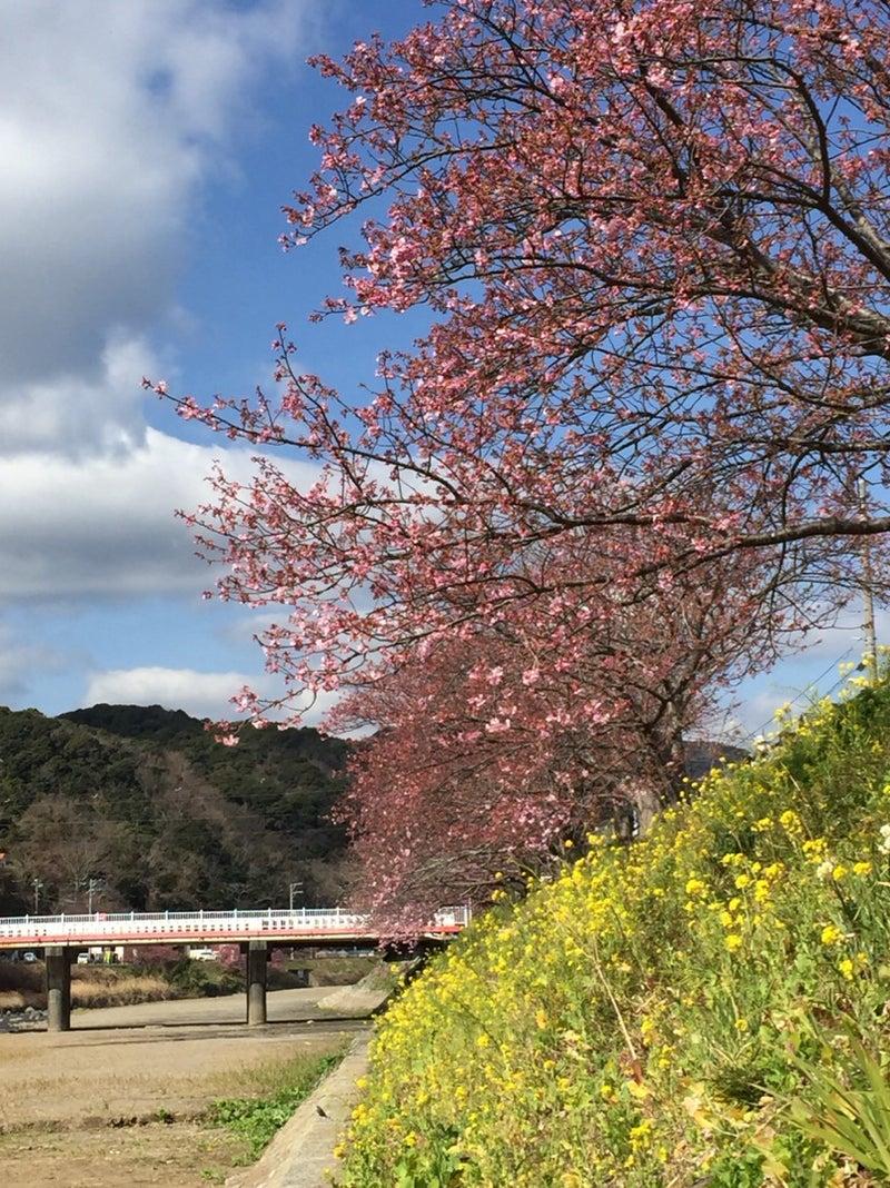 2021 河津 桜