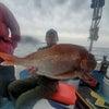 ノッコミ真鯛良型メイン~チョロ釣り 鹿児島錦江湾海晴丸の画像