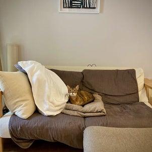 成猫、成犬をお探しの皆さん。横浜市動物愛護センターの譲渡情報も オススメです。の画像