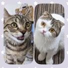 「猫の日フェア」開催!!の記事より