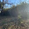 自然の中での笹刈り瞑想の画像