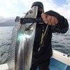 錦江湾デイタチウオ好調!トップ40匹越 鹿児島錦江湾海晴まるの画像