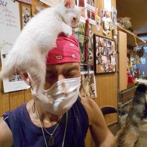 「命」を諦める選択とは?1匹の子猫が教えてくれた奇跡の画像