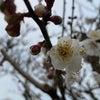 春は近くに来たようですの画像