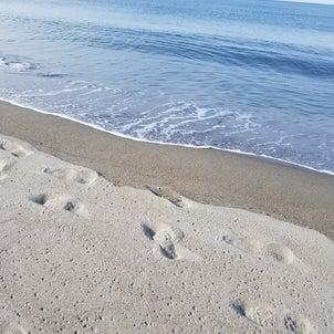 波の音を聴きながら・・・の画像