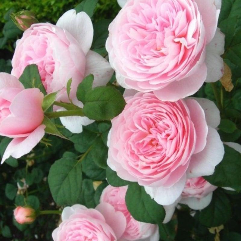 恋 を みたい な した 姫路 花束