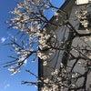 春ですねの画像