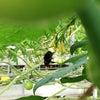 クロマルハナバチの画像