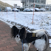 小雪舞う散歩とランと吹雪の公園♪の画像