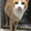 保護猫紹介つばきくん の画像