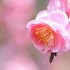 春らしいパステルカラーコーディネート♪の画像