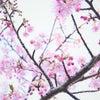 春を感じるの画像