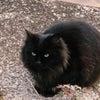 かっこいい猫さんに出会った朝の画像