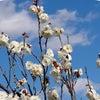 梅の花満開♪の画像