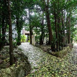 ■たびの邸宅 沖縄備瀬■ 備瀬のフクギ並木にまさか素敵なヴィラがあるなんての画像