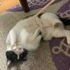 猫の日2021@猫萌え・その57の画像