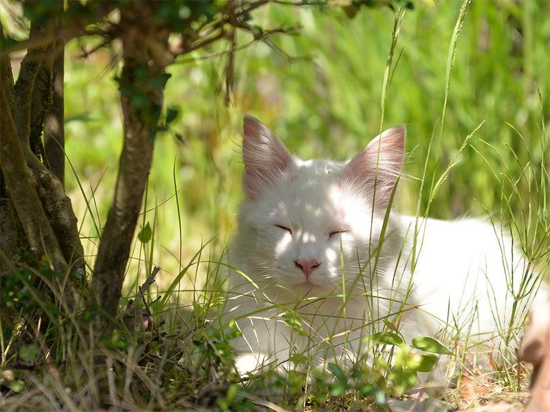外ねこ 笑顔をみせる 白い猫