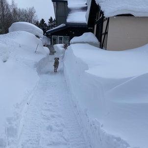 犬ぞりごっこと猫雪だるまの画像