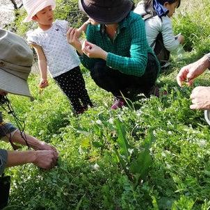 野草摘みからの野草料理教室@鴨川自然王国 4月の会 平日を追加しました。の画像
