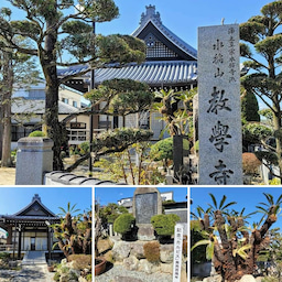 画像 今日は水稲山と号し、浄土真宗本願寺派で阿弥陀仏を本尊としている「教学寺」を訪れました! の記事より