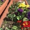 春の陽気《京町小路》の画像