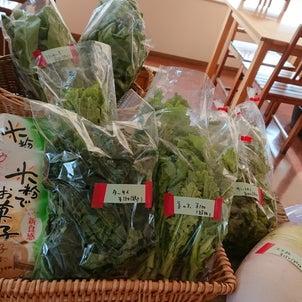 野菜入荷!の画像