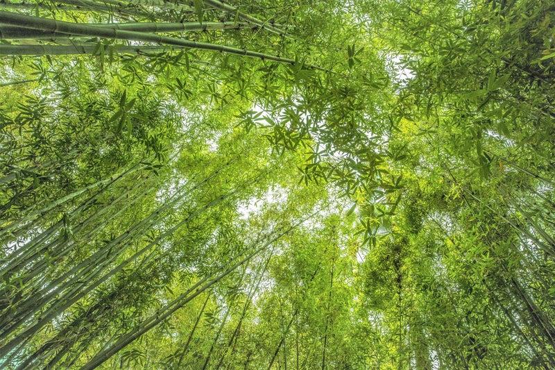 春で木々が芽吹くイメージ画像