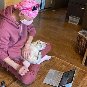 【尼崎センタープール前】超オススメ!保護猫カフェの画像