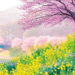 画像 3月の定休日&お知らせ の記事より 2つ目