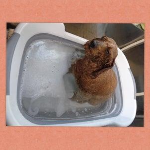 ★〓★炭酸泉温浴始めました♨〓★〓★の画像