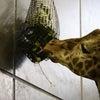 円山動物園でカメラの練習の画像
