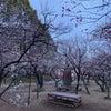 谷保天満宮の梅の画像