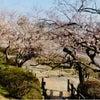 春は着実に♪の画像