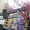 二月十六日 雨に滴る紅梅の画像
