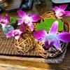 店内のお花  ヘナサロン 沖縄の画像