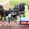 『よりそい FM 』という名のラジオ局!?の画像