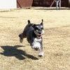 愛犬と心でつながることをサポートする仕事の画像